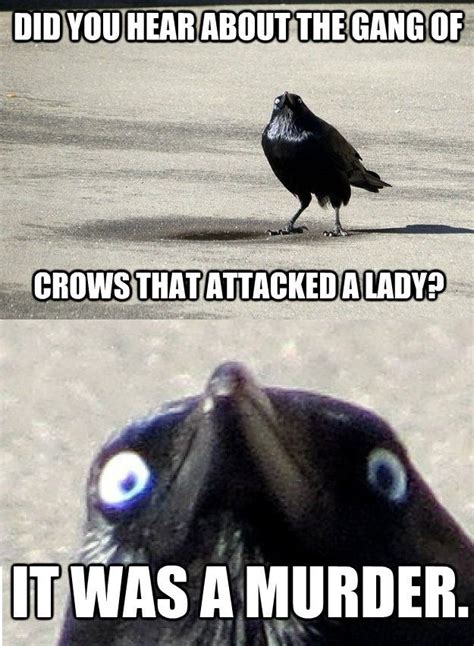Crow Meme - crow meme attacked murder memes comics pinterest
