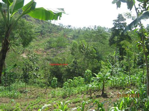 Minyak Nilam Di Jawa Tengah jual kebun di temanggung jawa tengah 081311661479