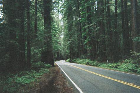Tumblr Themes Free Forest | tumblr bilder effekt f 252 r wald photoshop bilder bearbeiten