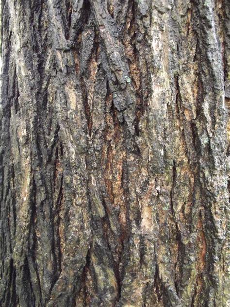 how to paint tree bark texture scenic artistry tree bark