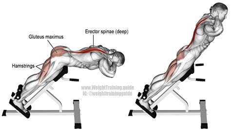 hyperextension exercise instructions  video weight