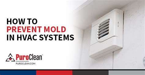 discount bathroom store fulham how to prevent mould growth 28 images how to prevent mold on food mold busters blog mold on