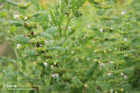 les pour plantes 25 plantes m 233 dicinales 224 conna 238 tre www floramedicina