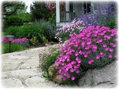 Best Plants For Rock Gardens Along The Way How To Build A Rock Garden