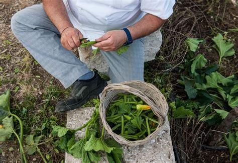 come cucinare le zucchine lunghe giugno il tenerumi foglie di zucchina cucina d la