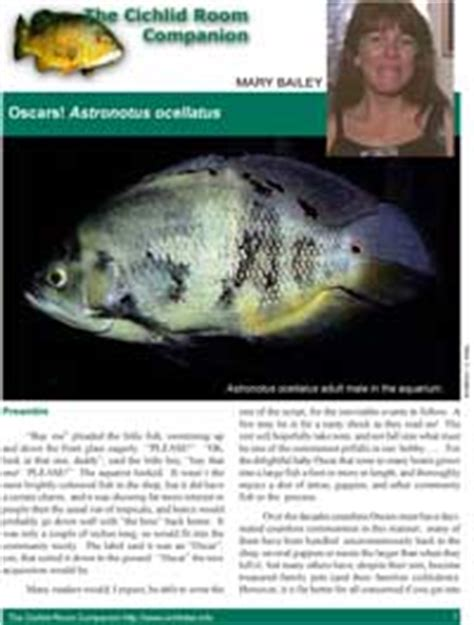 oscars! astronotus ocellatus by mary bailey cichlid room