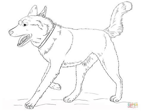coloring pages of husky dogs image gallery husky coloring pages