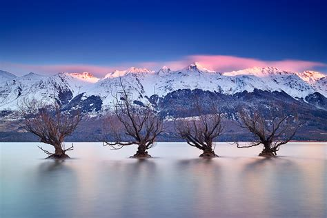 Landscape Supplies Queenstown Nz The Glenorchy Willow Trees Back Again For Winter