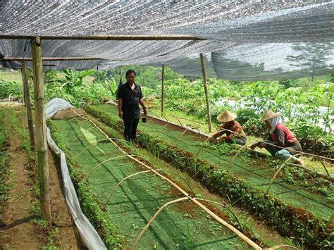 Jaring Paranet Harga jual produk plastik pertanian jaring paranet rajut 85