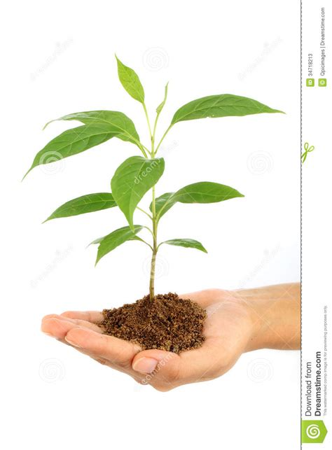 baby plants hand holding baby plant stock image image of beginnings
