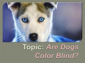 are dogs really color blind are dogs color blind