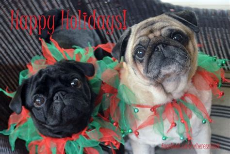 pug merry merry pugs aren t animals the sweetest things