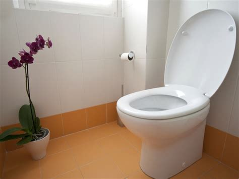 how to toilet a at how to remove and replace a toilet how tos diy