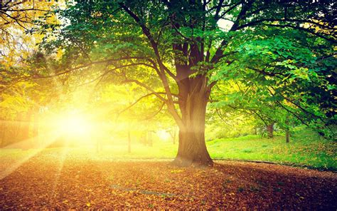 www trees tree morning nature hd 4k wallpapers