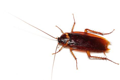 bed bug exterminator nj roach exterminator roach exterminator nyc roach