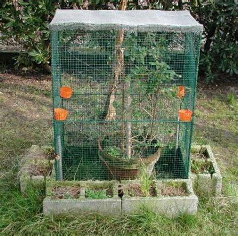 gabbie per tartarughe di terra il terrario per camaleonti aae onlus
