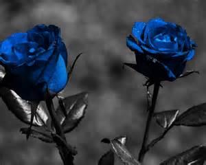 Roses Flower - 青いバラ 花の写真撮影の壁紙 1280x1024 壁紙ダウンロード 10wallpaper com
