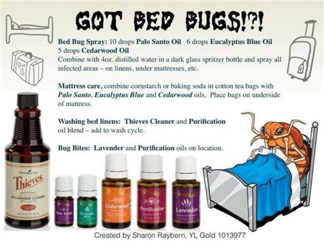 essential oils for bed bugs bed bugs essential oil pinterest