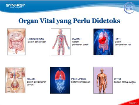 What Order To Detox Organs by Program Revolusioner Smart Detox Smart Detox Synergy