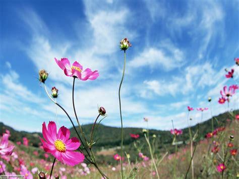 fiori prato foto fiori di prato per sfondi settemuse it