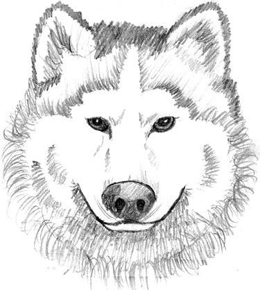 wolf coloring pages wolf coloring pages for adults kids