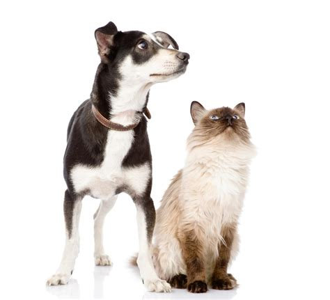 respiratory infection in dogs mycoplasma pcr testing in dogs and cats langford vets