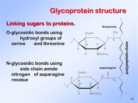 carbohydrates bonds carbohydrates structure and biological function ppt