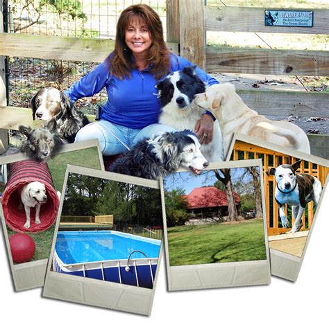 atlanta trainer atlanta trainer canine behavior specialists