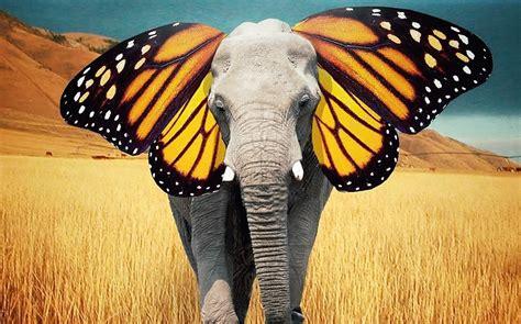 butterfly ear robert jahns elephant butterfly ears branding in asia magazine