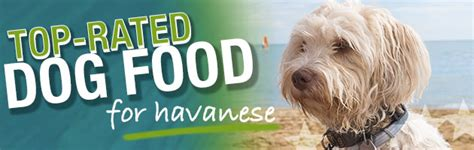 best puppy food for havanese what is the best food for havanese