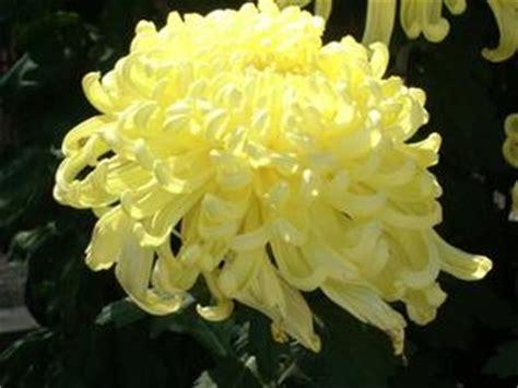 serre fiori fiori serre russelmobley