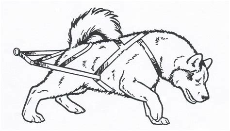 how to draw sled dog