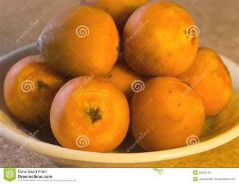 palm tree orange fruit orange coloured palm tree fruit royalty free stock images