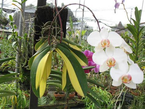 Pupuk Untuk Semua Jenis Bunga pertanian bunga november 2011