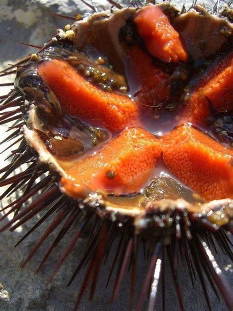 cucinare ricci di mare spaghetti al riccio di mare cosa cucino oggi ricette di