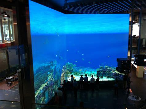 game design qut virtual reef interactive multitouch installation by pro av