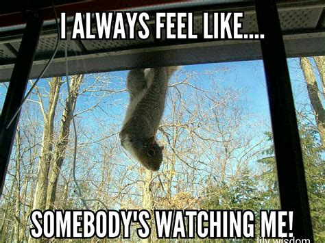 I Feel It Meme - 35 very funny squirrel meme pictures and images