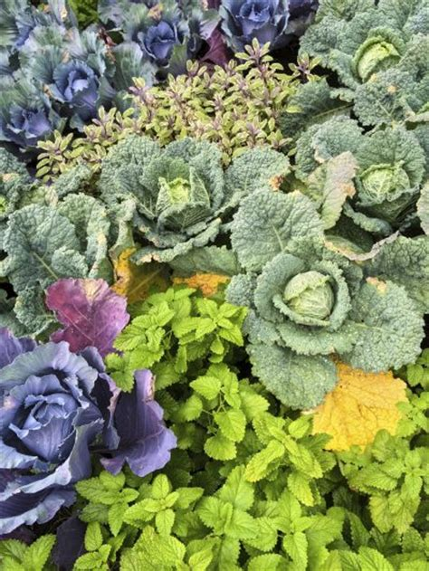 what to plant in summer vegetable garden planting next to mint what are plant companions for mint