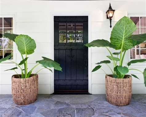 decorate  home  plants design  sri lanka
