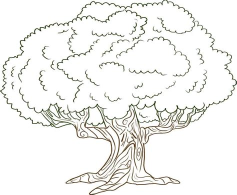drawn tree big tree pencil and in color drawn tree big tree