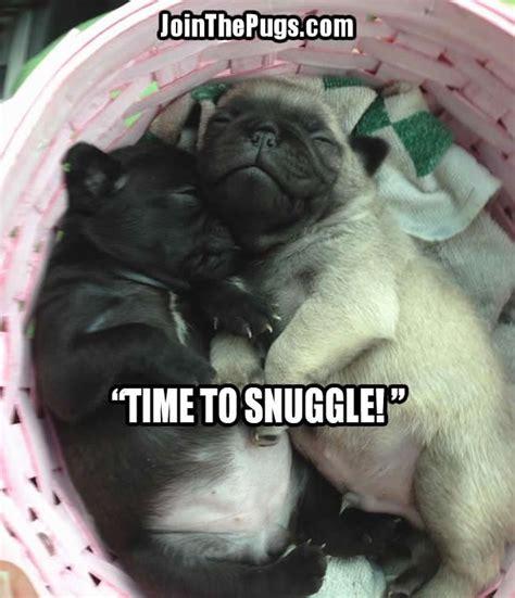 pugs meme pugs archives pug meme pugs
