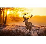 Free Deer Backgrounds  PixelsTalkNet