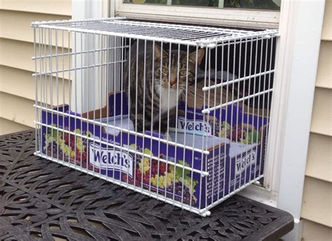 Cat Window Patio Bunny Is An Indoor Cat I Made Her A Window Cage So She