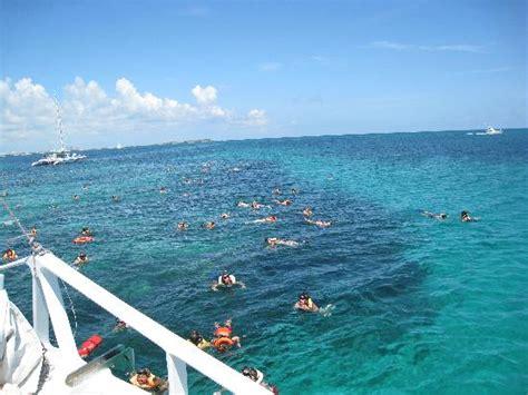 seahorse catamaran bahamas at the reef picture of seahorse sail and snorkel