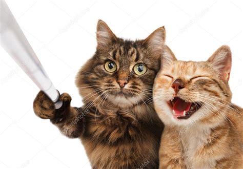 un gato a cat 842635095x grappige katten foto zelf stockfoto 169 funny cats 80421468