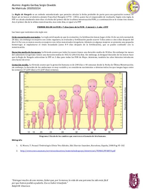 determinacion de fecha de parto fecha probable de parto