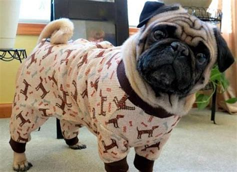 pajamas for pugs pug pajamas pug