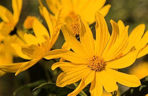 computer wallpaper yellow flower yellow flower picture 1080p hd desktop wallpapers 4k hd