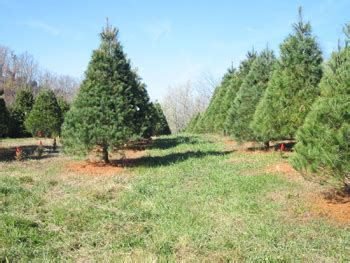 28 best christmas tree farm ky family photos family