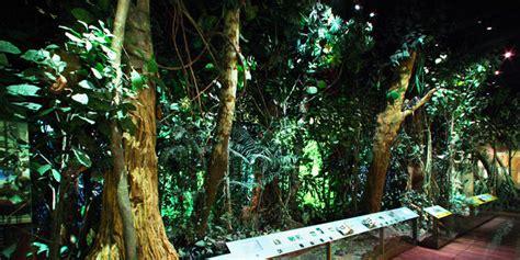 Southwestern Home by The Dzanga Sangha Rain Forest